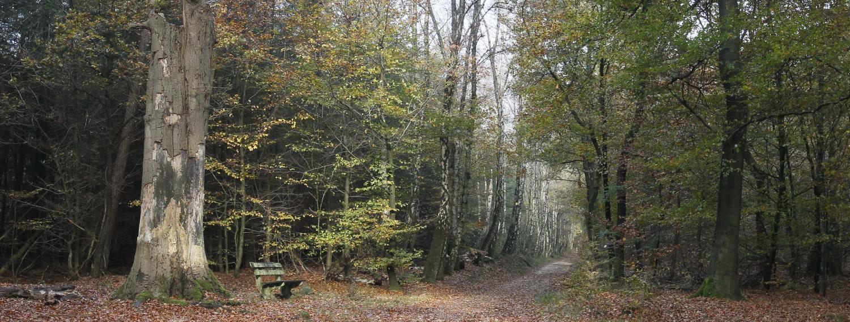 Trainen in het bos